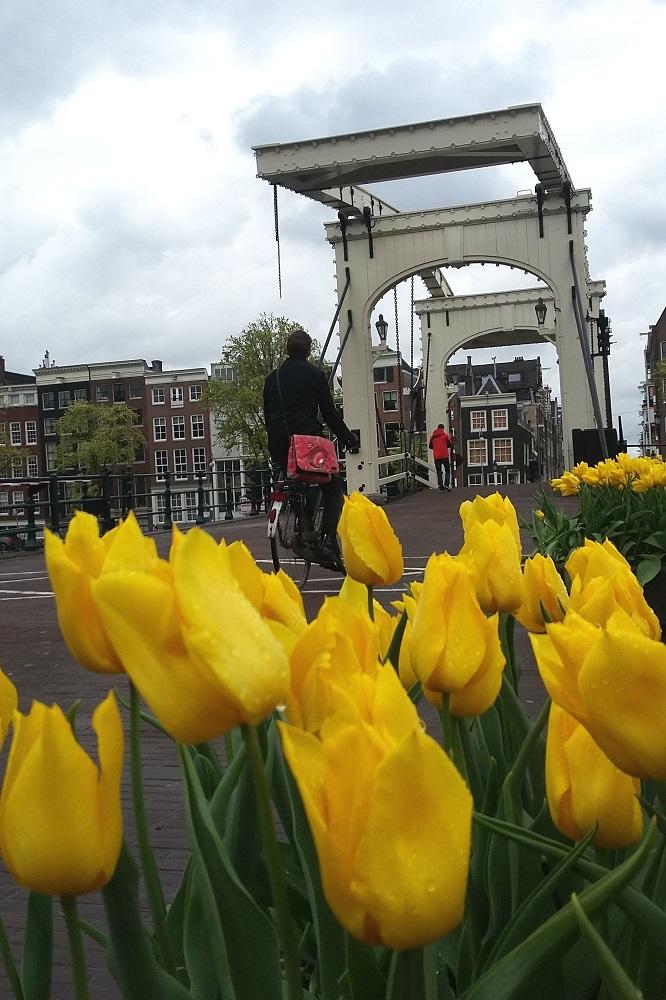De Magere Brug met tulpen te Amsterdam